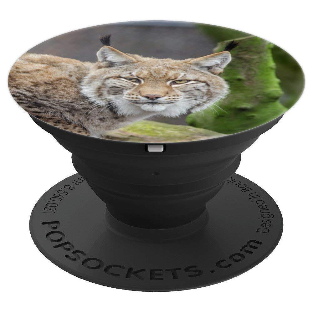 Wildcats, Bobcats,